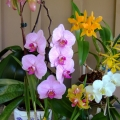 july2011orchids