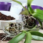 Repotting Session for your Orchids