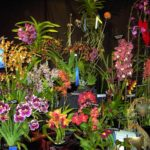 NH Orchid Show