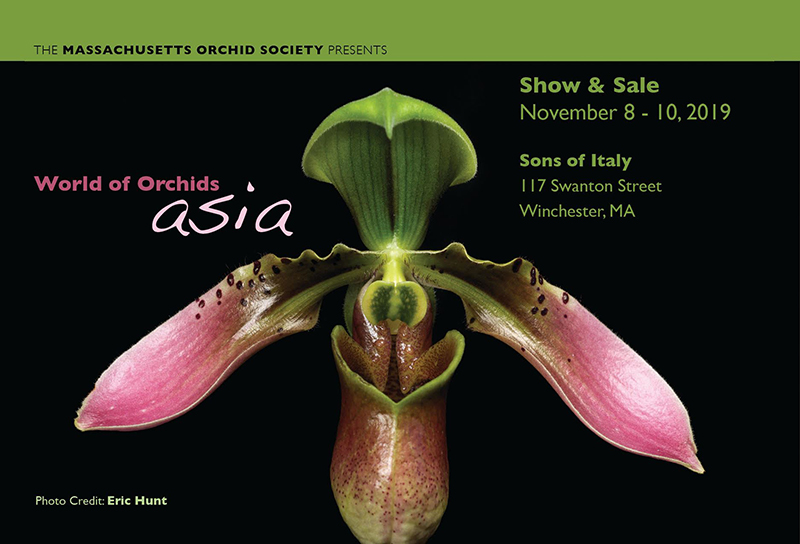 Massachusetts Orchid Society's annual Orchid Show